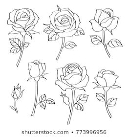 Vector Set Of Simple Roses Vintage Flowers Rose Drawing Simple Roses Drawing Rose Outline Tattoo