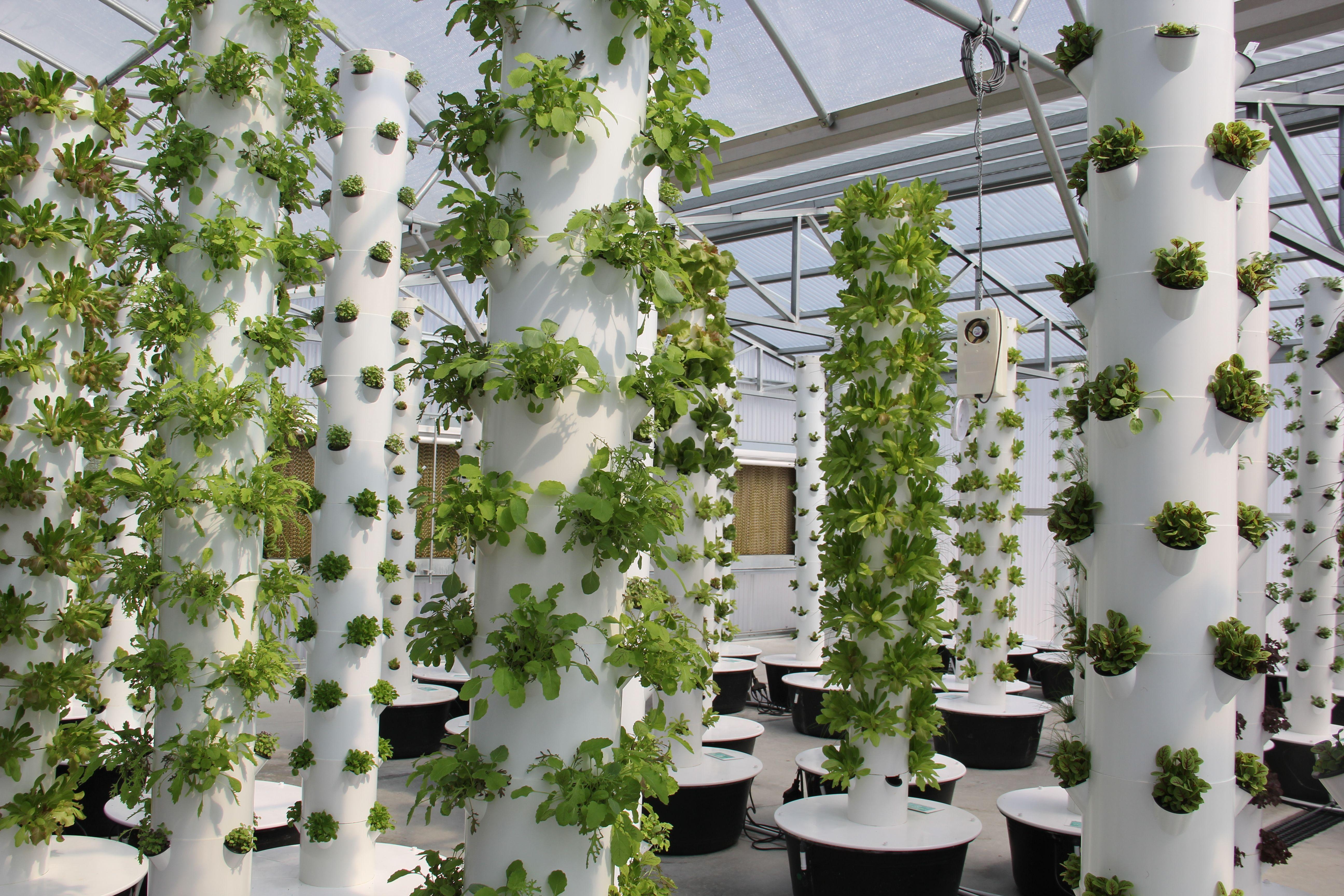 Aeroponic Garden Pyramid Gardening Organic Veggies