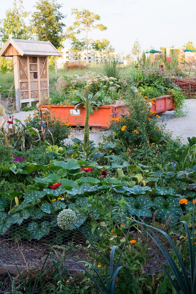 Urban Gardening im August  Alles leuchtet is part of Urban garden Drawing - Nun dominieren die Farben des Spätsommers unseren urbanen Garten  Ganz langsam   Stück für Stück   bahnt sich der Abschied vom Sommer an  Überall leuchtet es nun in den unterschiedlichsten Orangtönen, Rot, Gelb oder auch mal ein kräftiges Pink sticht durch das Grün der Gemüsebeete hervor  Auch die Fetthenne, die du Links im Bild sehen kannst, steht schon in den Startlöchern und wird in wenigen Tagen ihre rötliche Blüten zeigen und zum Liebling der Bienen werden  Den Sommer konservieren Die Ernte geht langsam zurück, doch immer noch ist reichlich vorhanden, um fleißig Pizza im Lehmofen zu backen, Gemüseauflauf zu kochen …