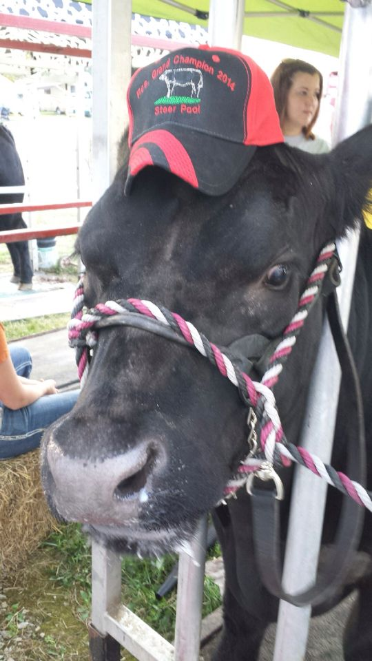My baby boy bugs at the Hartford fair. He won Reserve Grand Champion in the steer pool show.