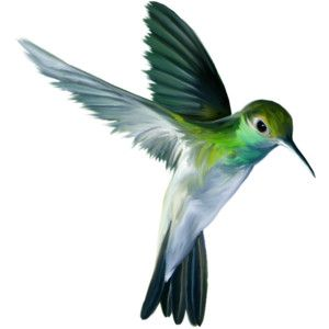 Birds Animals Cliparts Png Cliparts Anna Hummingbird Painting Hummingbird Art Humming Bird Art