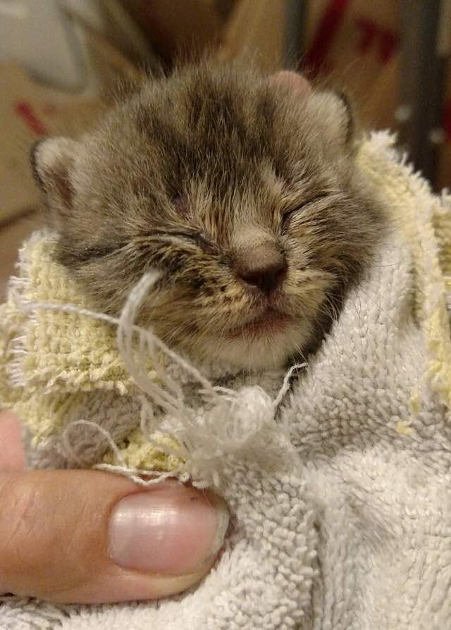 Rescue Baby Blind Kitten Nursed Back To Health Now Can See