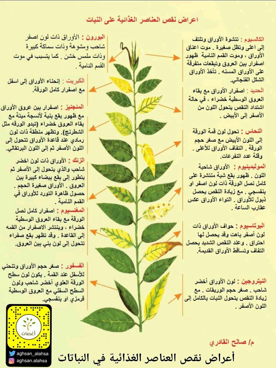أعراض نقص العناصر الغذائية عند النباتات Plant Leaves Plants Garden