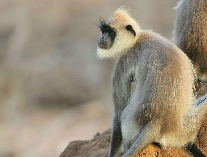 Lakh Bahosi Sanctuary in Uttar Pradesh, India (With