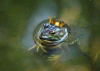 Pin By Monika Nocun On Cos Dla Duszy I Ciala I Umyslu Prince Frog Prince Animals