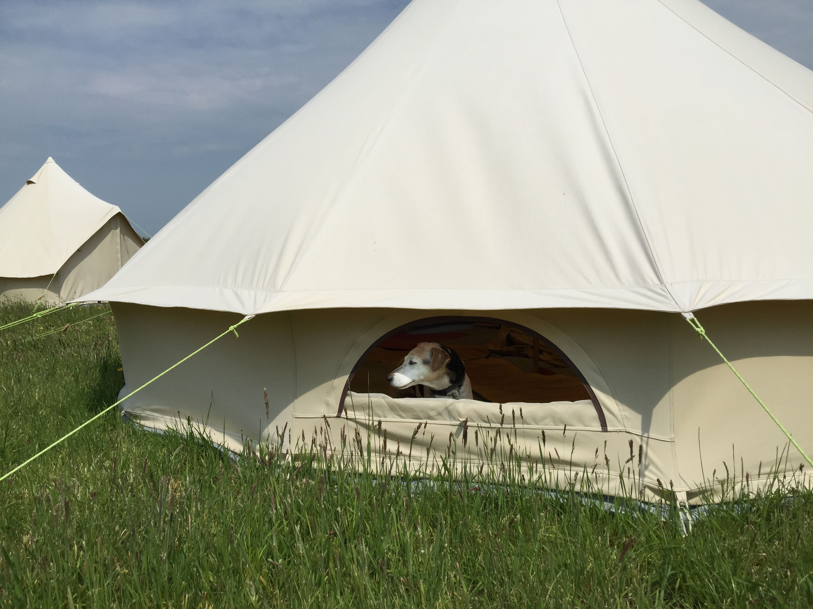 Our little dog just loves the Pukka bell tent