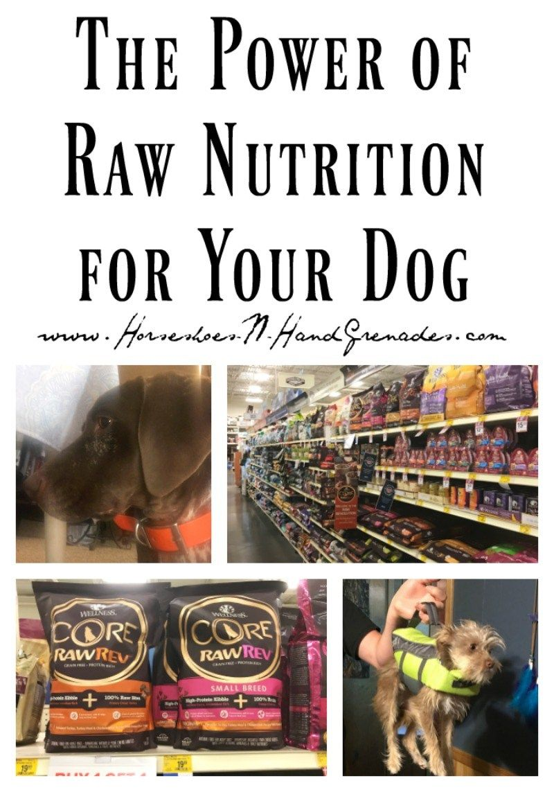 The Power of Raw Nutrition for Your Dog Raw feeding for