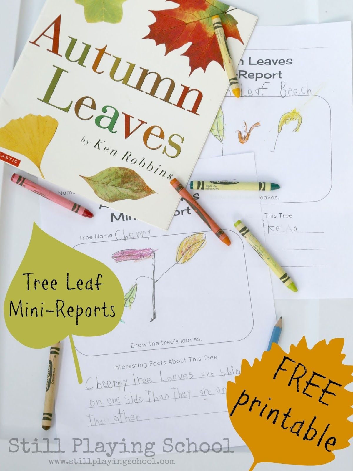 Autumn Leaves Drawings And Mini Reports