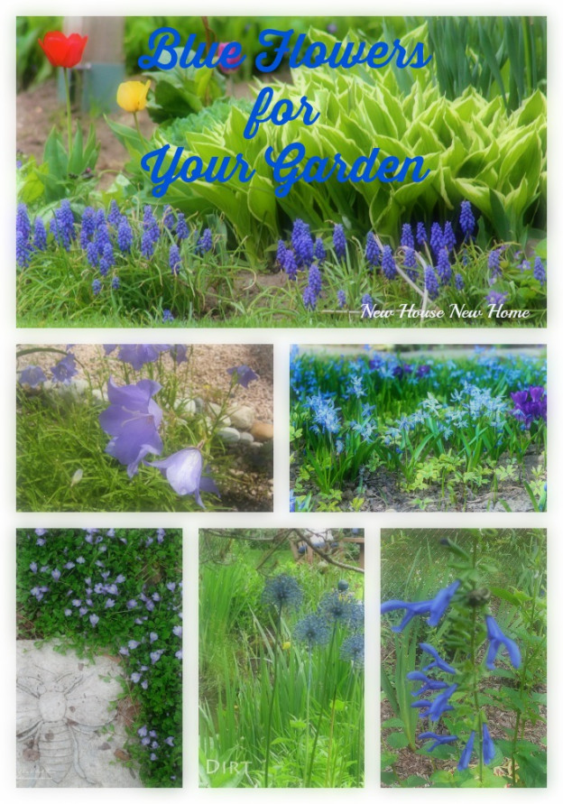 Blue Flowers for Your Garden ~ New House, New Home