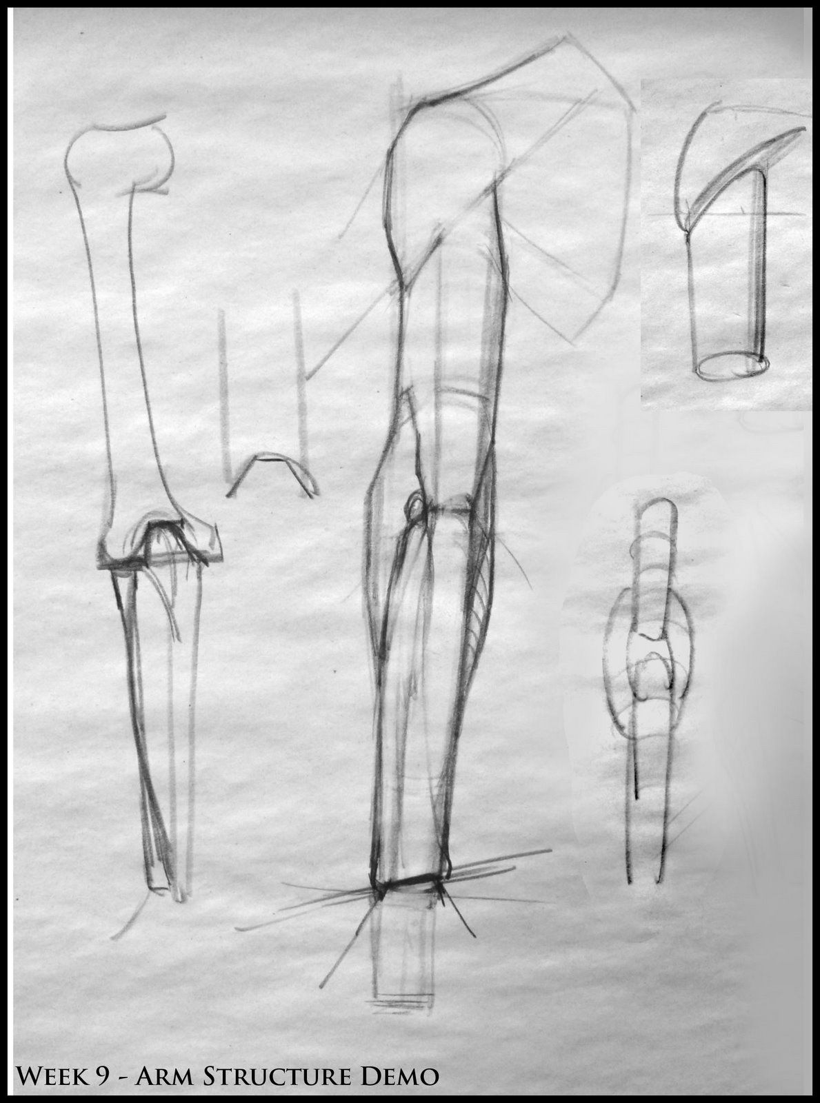 Analytical Figure Drawing Sp08 Week 9 Arm Structure Demo