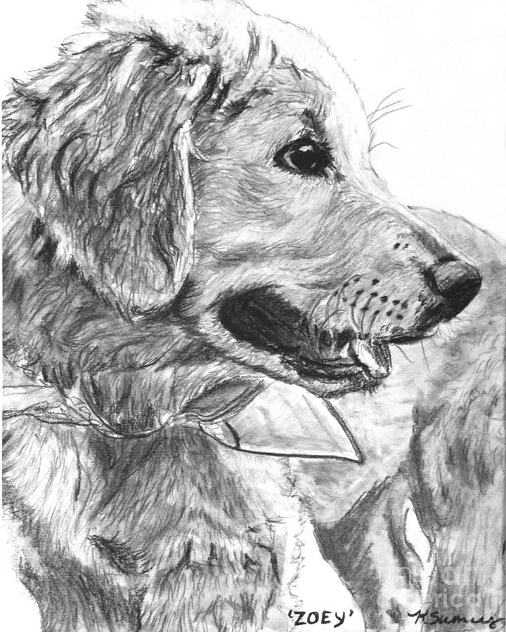 Golden retriever puppy in profile by kate sumners need to golden retriever puppy art print of drawing dog art zoey ccuart Choice Image