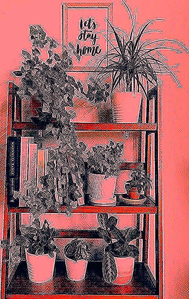 Schönes Pflanzenregal #homedecor