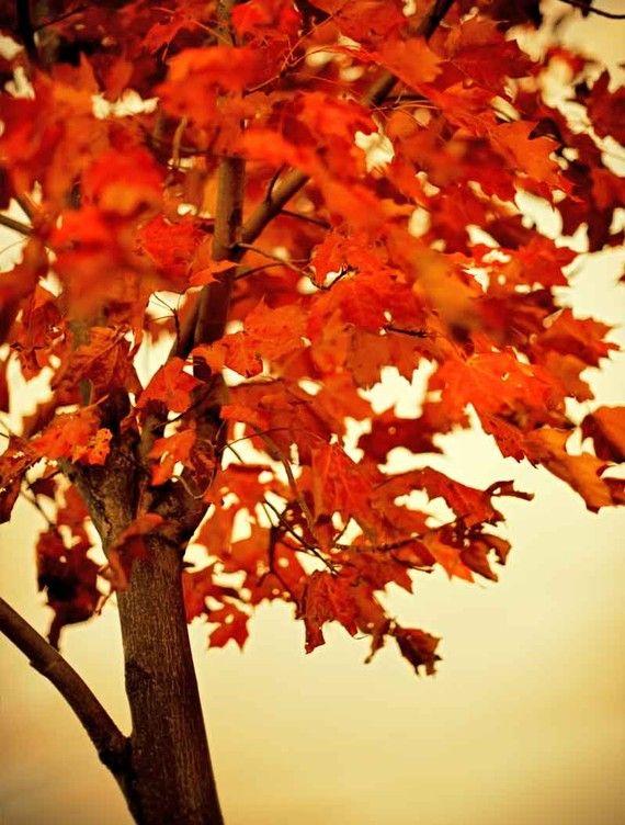 red tree leaves  buckscountyframes  ETSY