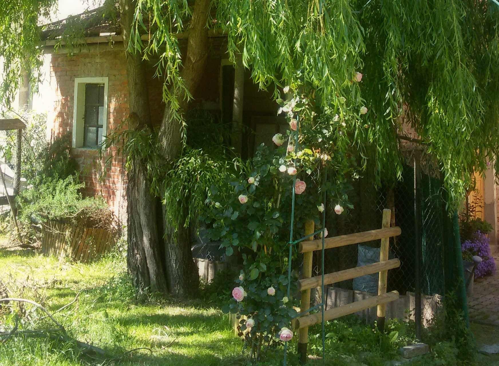 My garden, Italy.