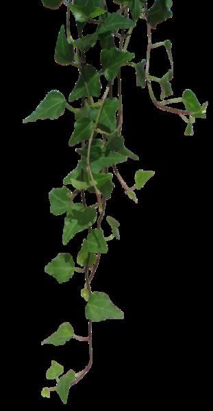 Hanging Vines | Nature