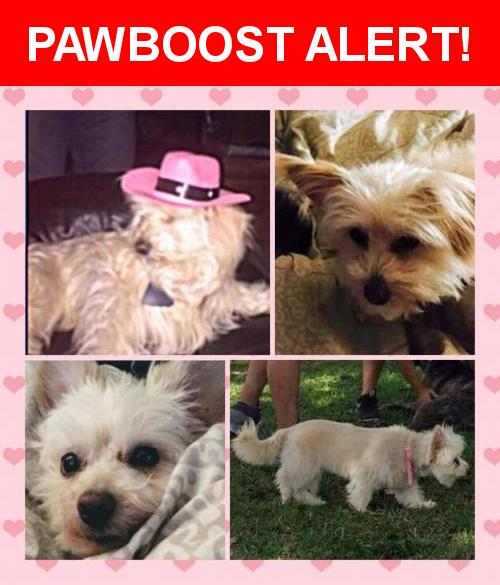 please spread the word  princess was last seen in miami fl 33196  nearest please spread the word  princess was last seen in miami fl 33196      rh   pinterest