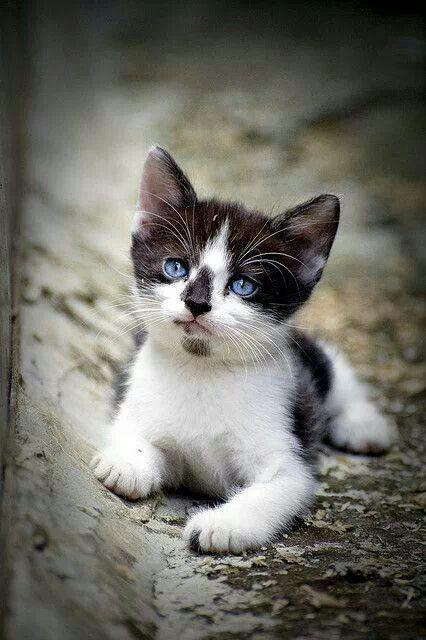 Cuteeees--lovely eyes
