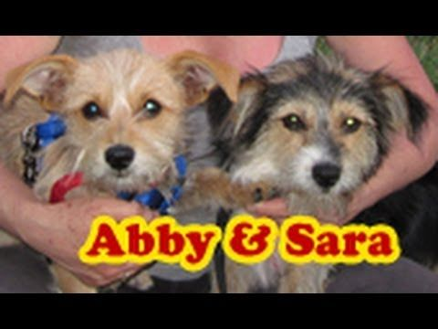 Dog rescue Sara & Abby (Please share and help us find