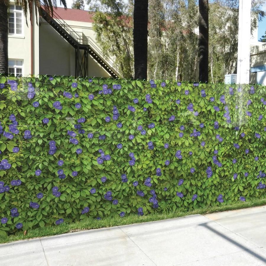 Fencescreen Purple Morning Glory Purple Morning Glory Graphic Lowes Com Chain Link Fence Privacy Chain Link Fence Landscaping Along Fence