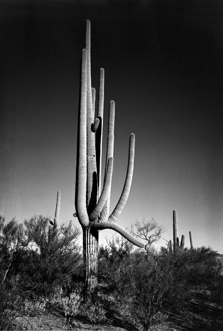 Photography by Ansel Adams | ansel adams 3 « Oscar en Fotos ...