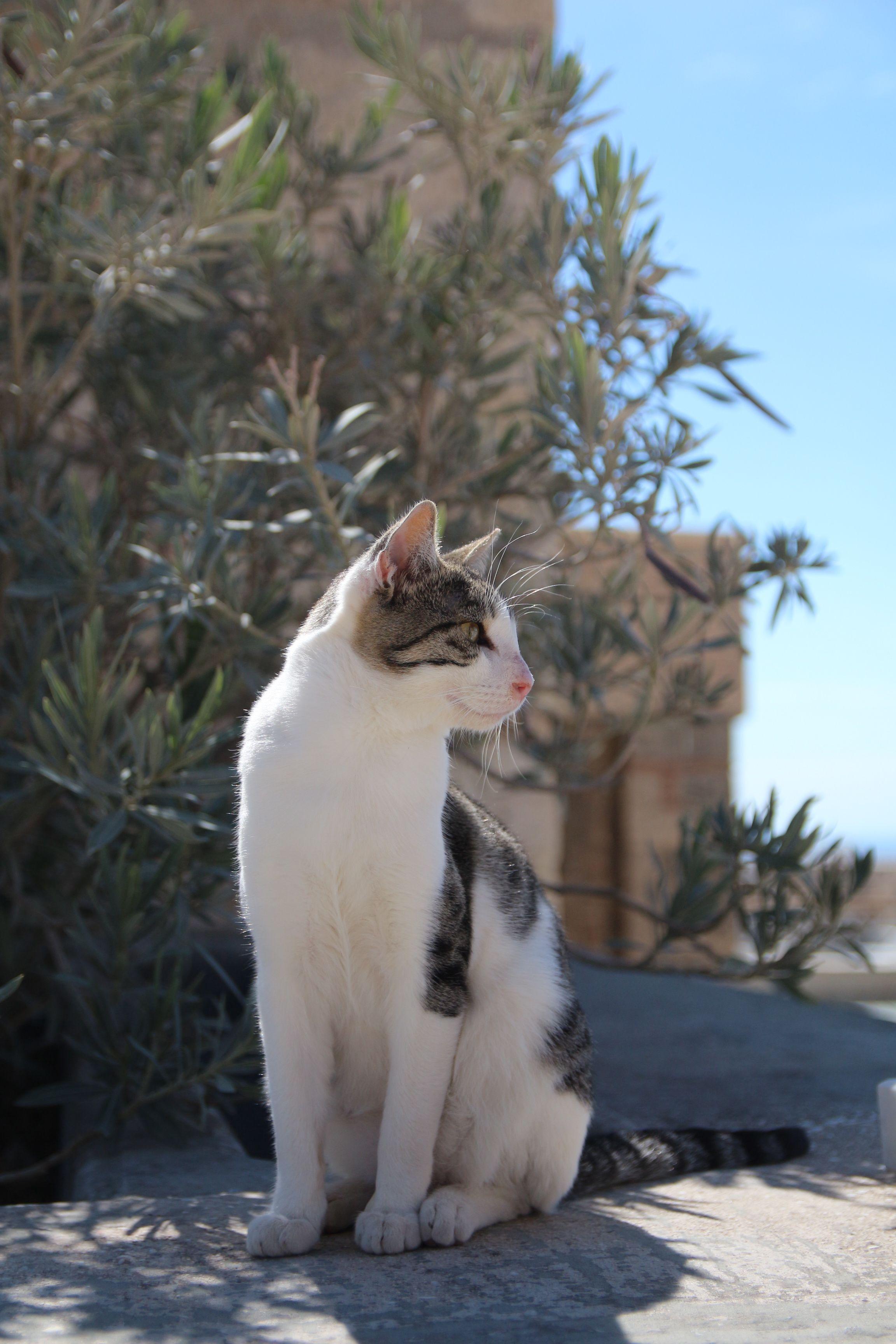 cat straycat at Athens アテネ 野良猫