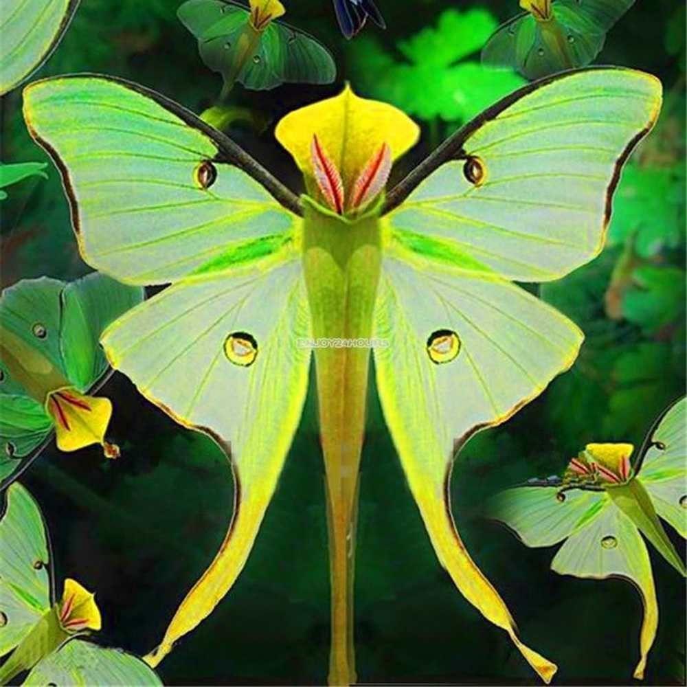 Pcs phalaenopsis orchid seeds bonsai rare orchid flower seeds