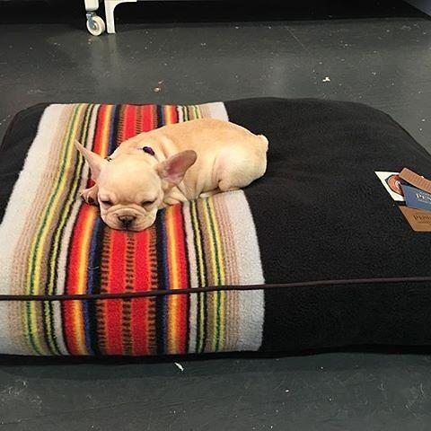 Bed Shopping Looks Like A Solid Yes Photo By Kt Ny Lazysunday Frenchbulldog Dogsofinstagram Pendleton National Boho Dog Bed Dog Pet Beds Pendleton Dog
