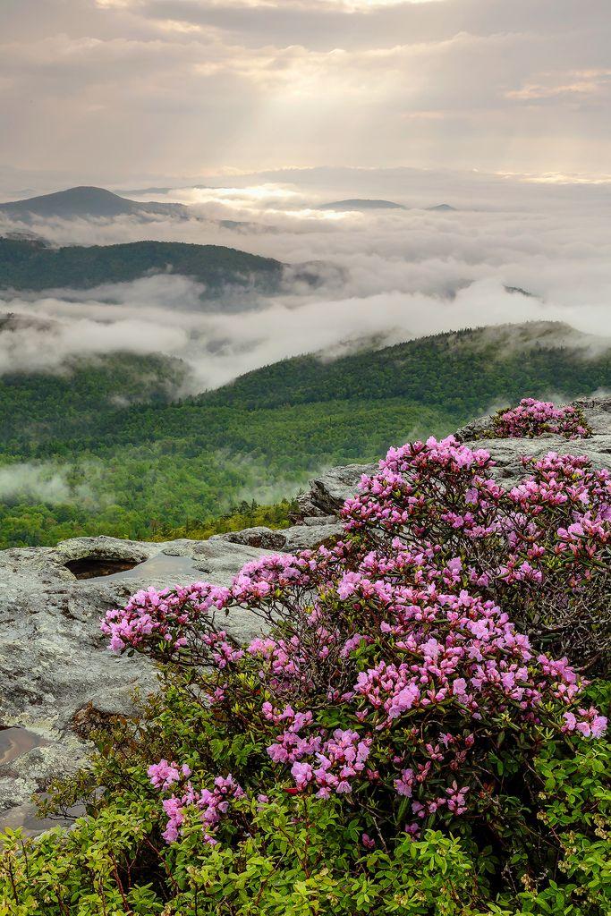Hawksbill Mountain, Linville Gorge Wilderness, North Carolina #Appalachian #South #Southern