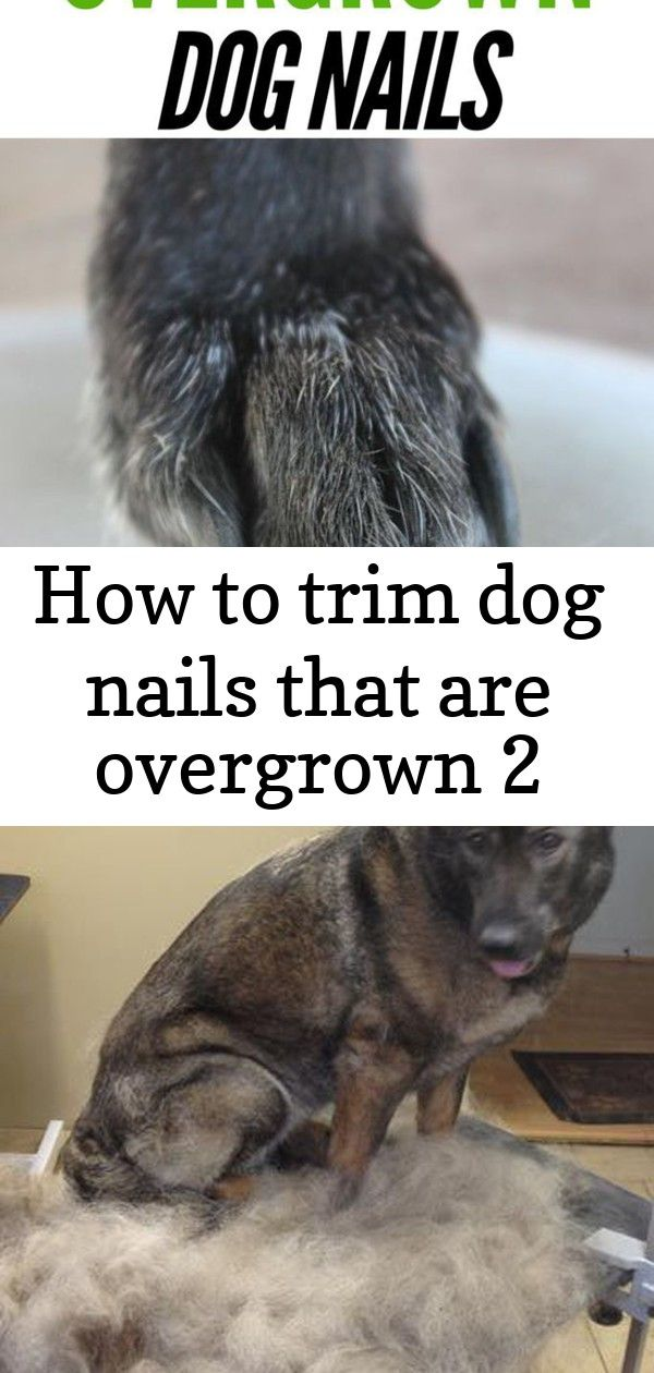 How To Trim Dog Nails That Are Overgrown 2 Trimming Dog Nails Dog Nails Dog Grooming Tips