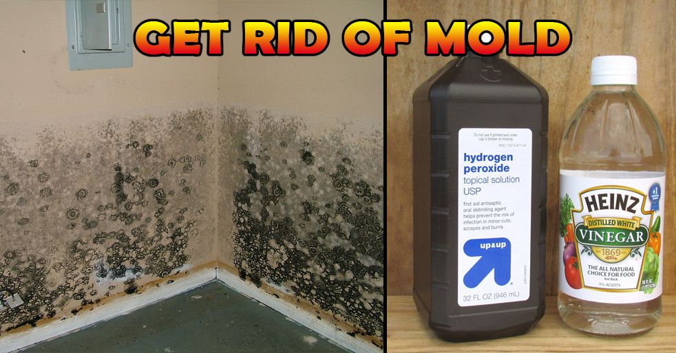 Remove Mold Forever With These 3 Methods Naturally