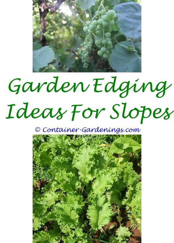 Container Gardening Container gardening, Gardening magazines and