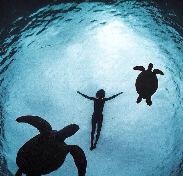#unterwasser #schildkröten #natur