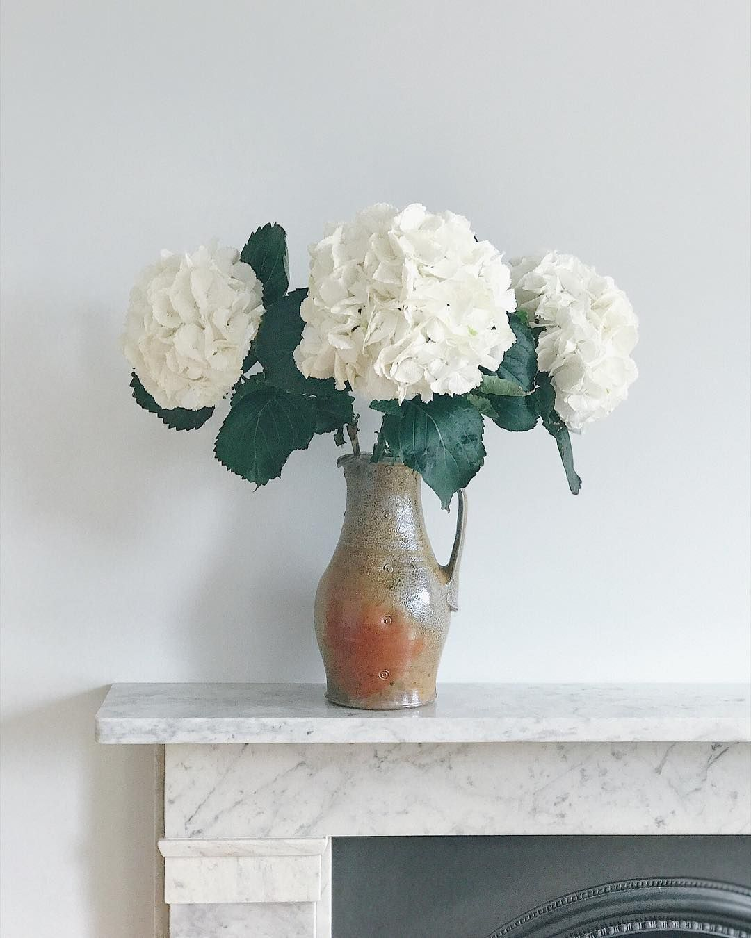 Hydrangea As Big As My Head From Colombia Road Yesterday We Try To