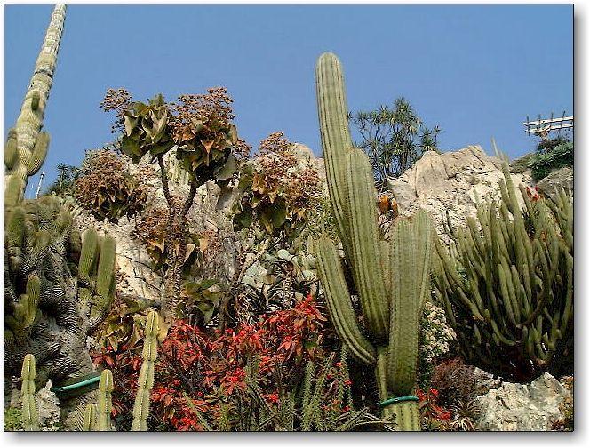 Jardin Exotique De Monaco Garden Plants Nature