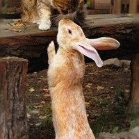 Interspecies Love: Whisker Kisses -- Daily Squee