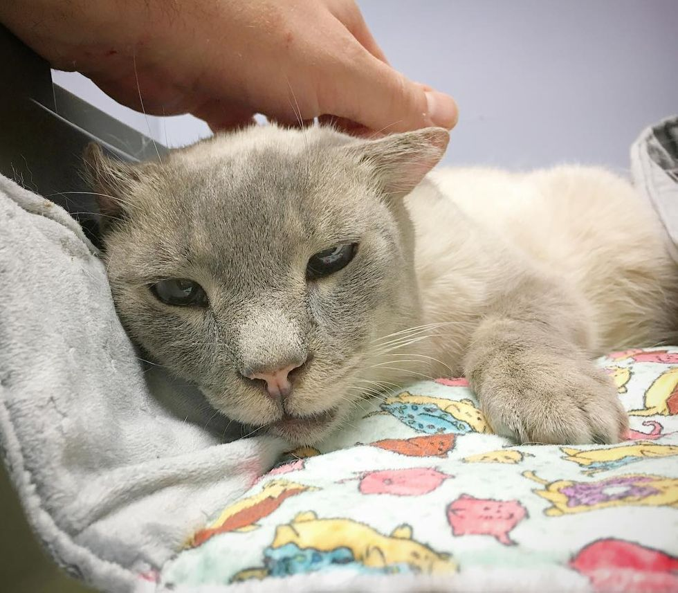 Senior Cat Lost Ears And Teeth Finds Happiness Through Love Love Meow In 2020 Senior Cat Kitten Cats And Kittens