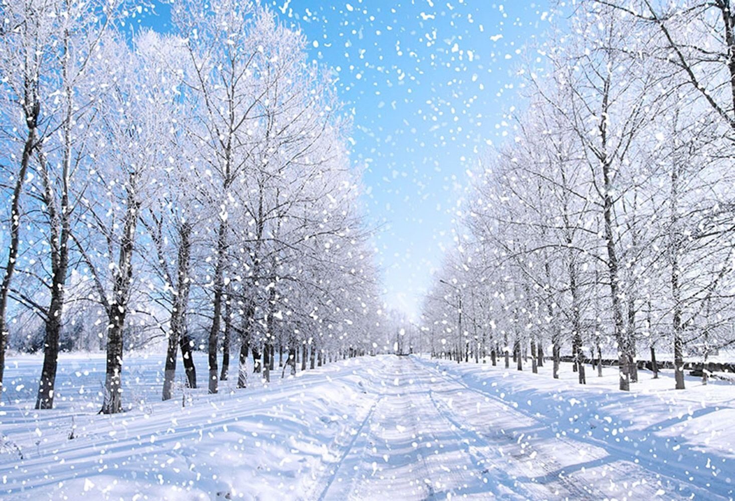Snow Landscape Photograph Backdrops Winter Snow Flake Forest Trees Background For Picture Snowfall Wallpaper Scenery Photography Snow Pictures Hd wallpaper snow winter nature branches