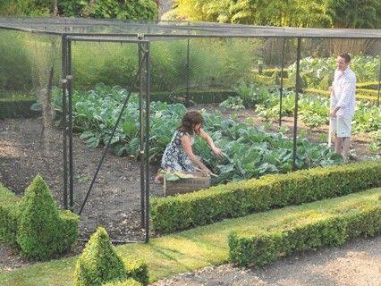 Walk In Fruit Vegetable Cages Tortoise Stuff Pinterest