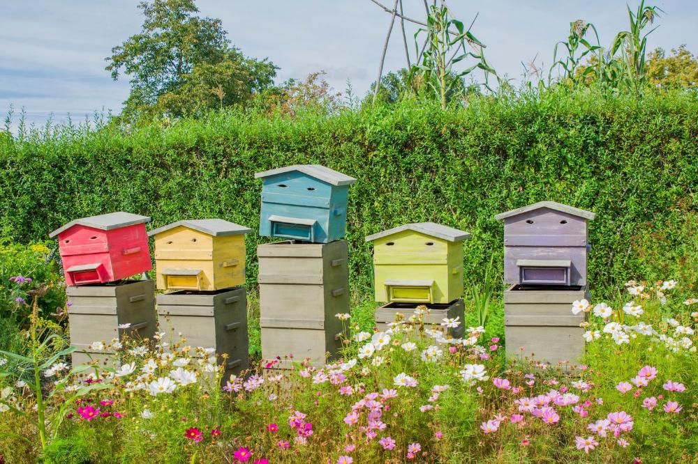 Ruche apicole à domicile: 5 choses à savoir   – Abeille