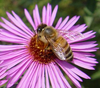 NRCS wants to help fruit growers help honey bees by planting more flowers