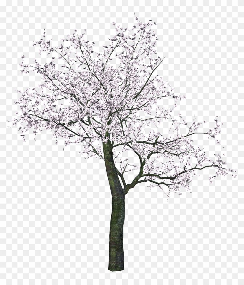 Pin By Tracy Trần On Drawing In 2021 Cherry Blossom Tree Blossom Trees Tree Drawing