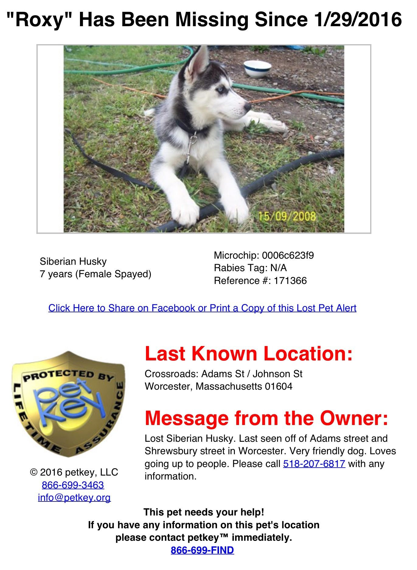 Lost Female Siberian Husky Dog Named Roxy Last Seen Off Of Adams Street And Shrewsbury Street Worcest Husky Dog Names Female Siberian Husky Siberian Husky Dog