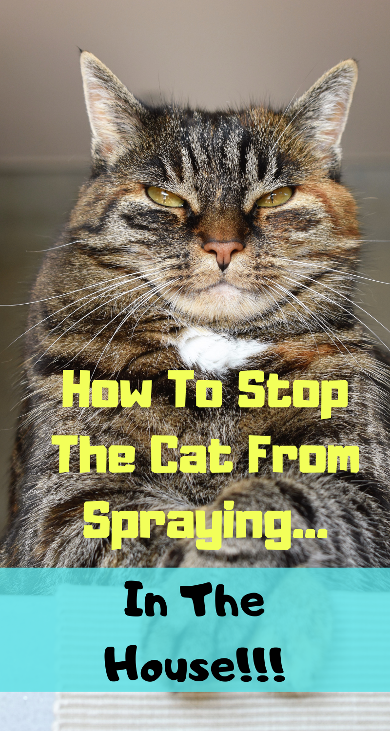 how to stop cats from spraying