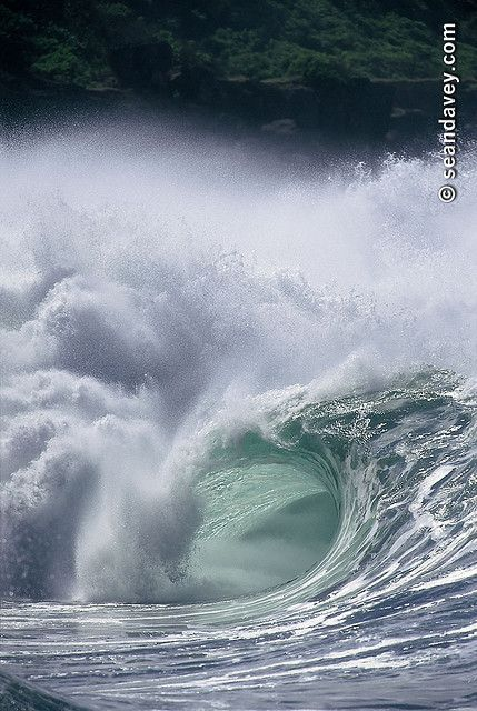 A hollow tubing wave at Waimea Bay, on the nrth shore of Oahu, Hawaii.