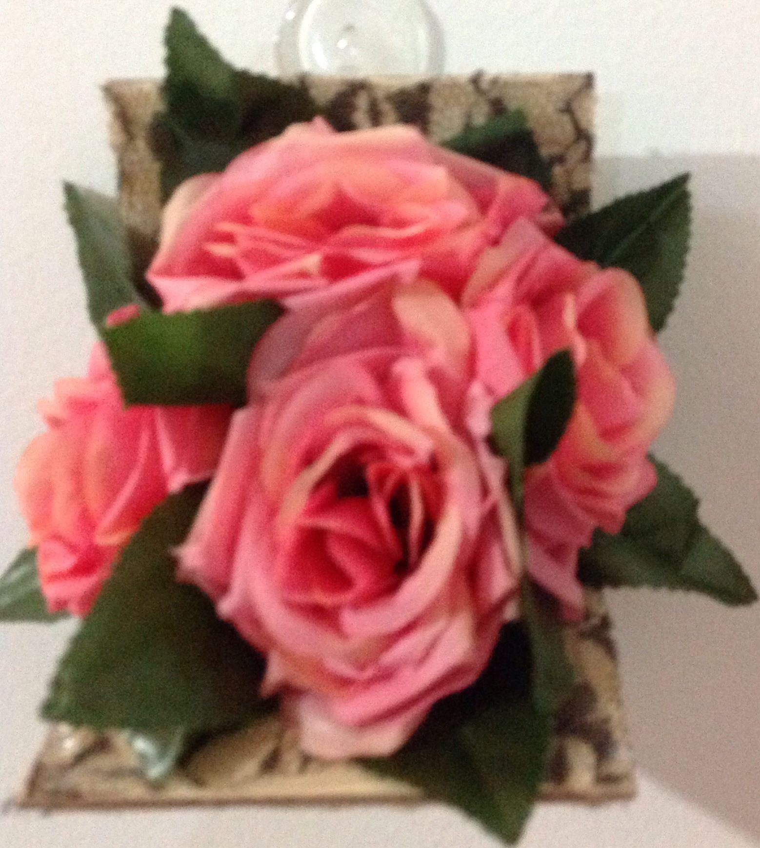 اللون البني و اللون الزهر Rose Plants Flowers