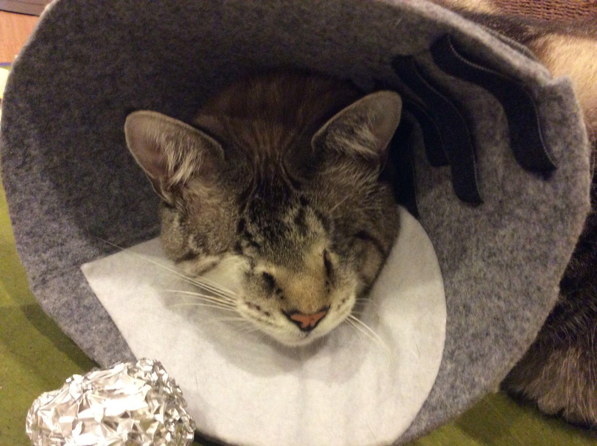Pin On Diy Pet Cone Collar