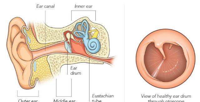 Ear Infection Remedy Ear Infection Remedy Ear Infection Swimmers Ear
