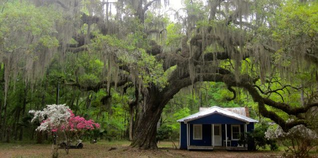 Discover unique places to stay in South Carolina The