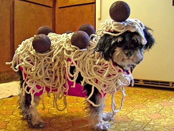 19 Dogs Who Absolutely Detest Halloween | Costumes, Dog and Pet ...