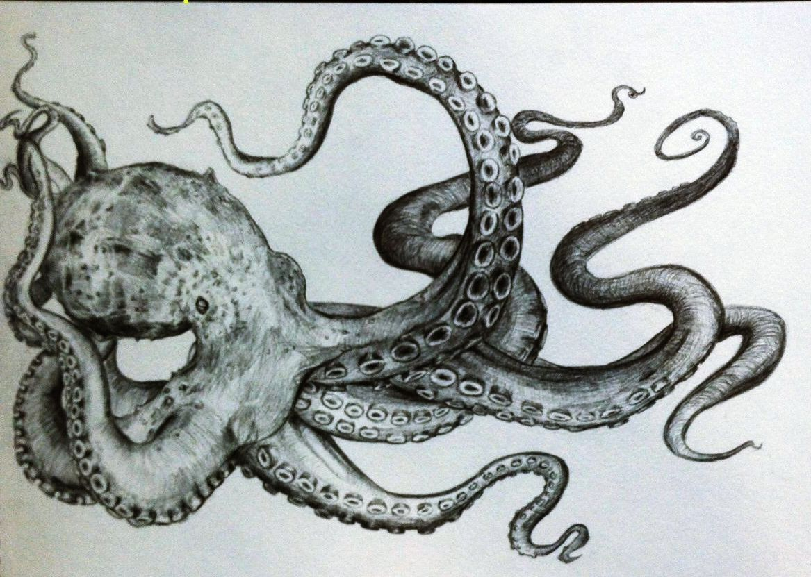 Uncategorized Drawing Of An Octopus best 25 octopus sketch ideas on pinterest kraken tattoo black and white drawing pencil squid street art octopus